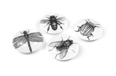 Magneet Eye - Bug - set van 4 glazen magneten