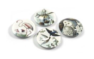 Vogel magneten 'Bird'van glas - set van 4 stuks