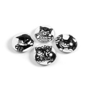 katten magneten rond
