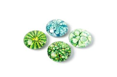 magneten rond vetplanten